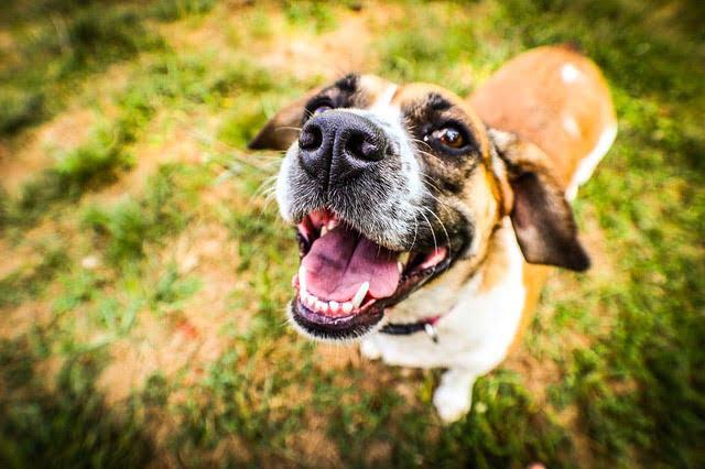 Adopter un chien de refuge en bonne santé