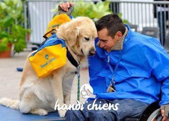 Association Handi'chiens
