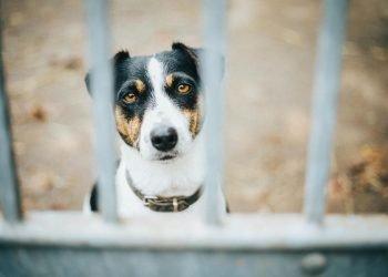 Comment dénoncer maltraitance animale internet