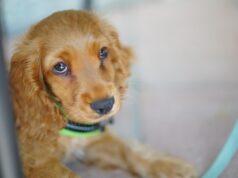 5 façons d'aider les chiens de refuge