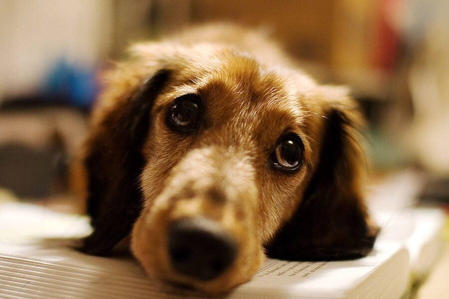 8 mythes sur la santé du chien