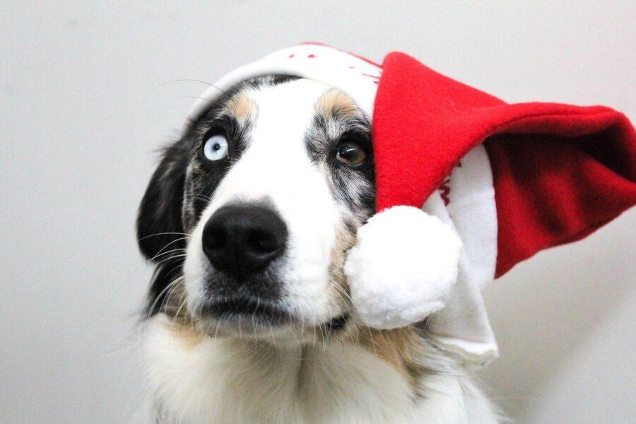Dangers Noel chien