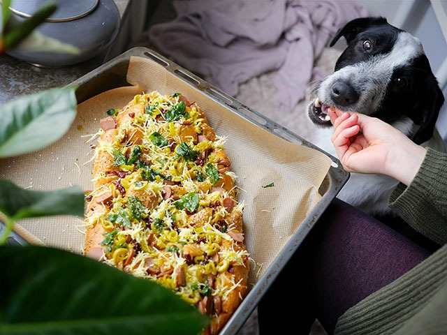 Nourriture dangereuse chien