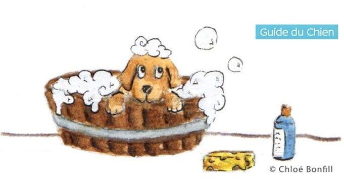 Comment donner un bain à un chien qui n'aime pas ça
