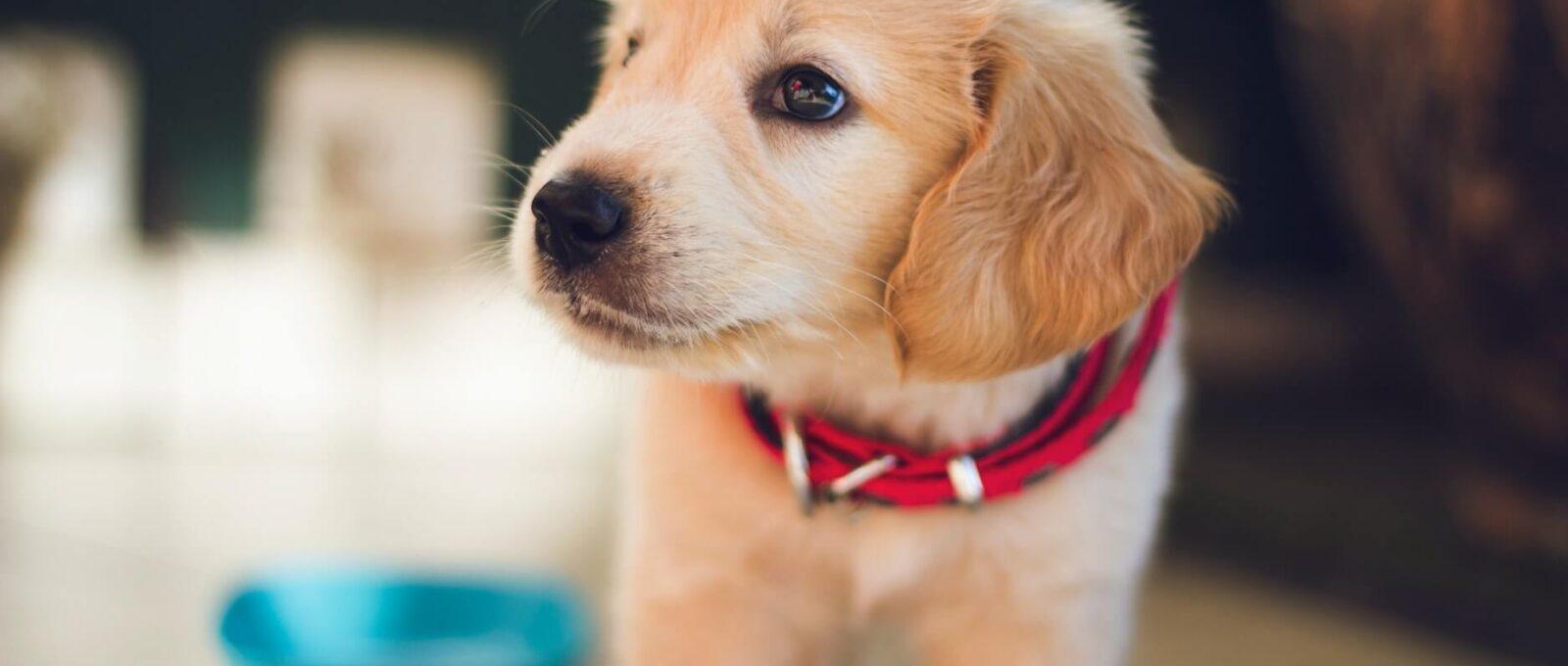 Comment apaiser un chien craintif chez le vétérinaire