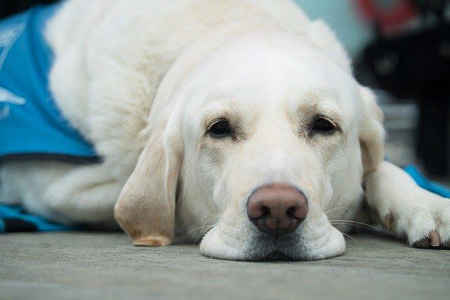 Ne le surprotégez pas du vétérinaire et de ses piqûres