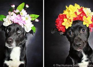 Syndrome du chien noir de magnifiques photos pour faire adopter ces chiens discriminés