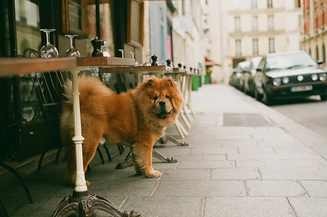 Ne laissez pas votre chien seul dans la voiture ou devant un magasin