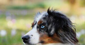 La Communication Intuitive® appliquée aux chiens