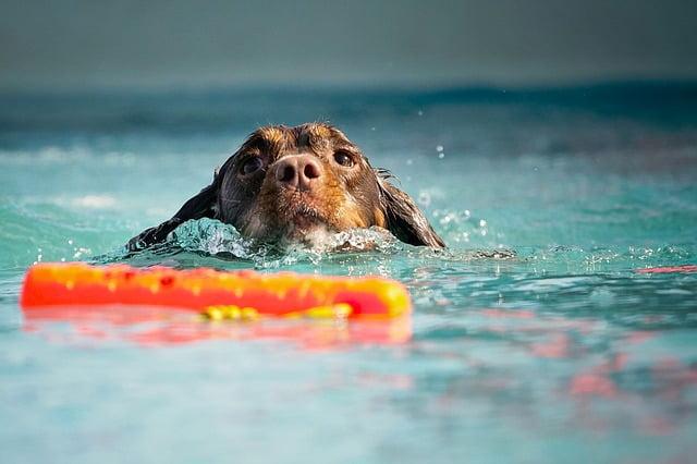Accident noyade chien