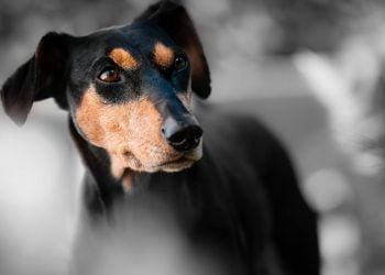 6 conseils pour éviter de se faire voler son chien