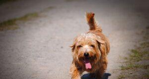 7 conseils pour protéger son chien de la chaleur en été