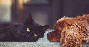 Droits chiens chats ville espagnol