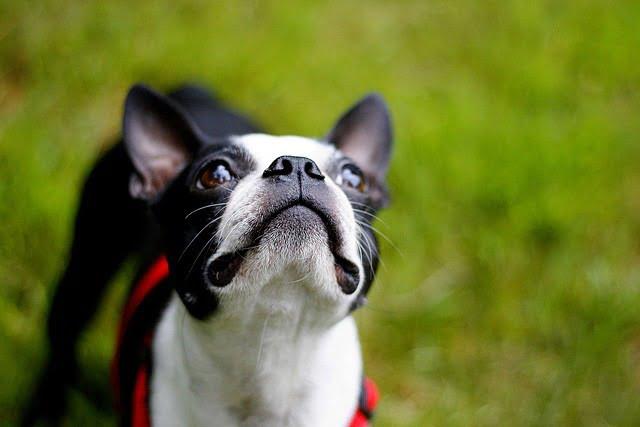 5 idées reçues sur les petits chiens - Guide du chien
