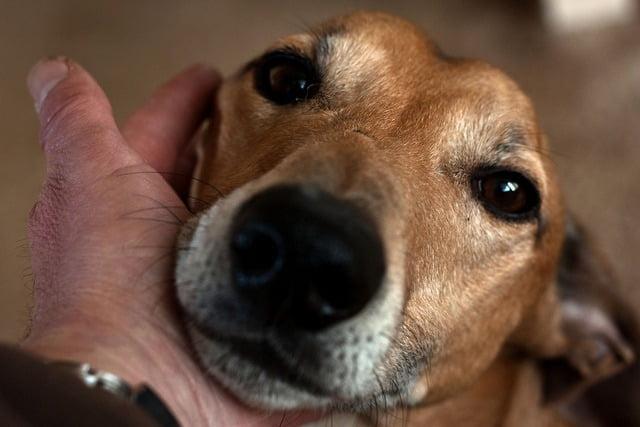 7 raisons d 39 adopter un chien g. Black Bedroom Furniture Sets. Home Design Ideas