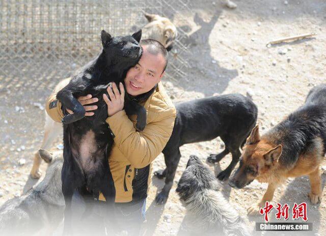 Millionnaire, il utilise toute sa fortune pour construire un refuge et sauver 2000 chiens d'un abattoir