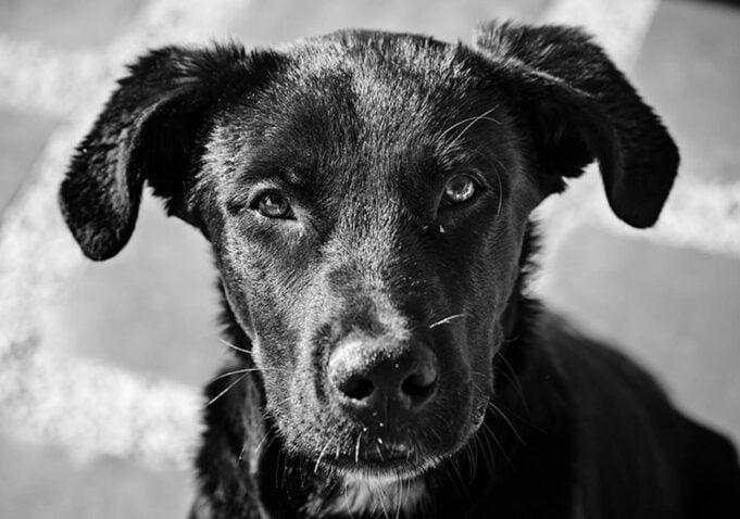 Millionaire sauve chien abattoir Chine