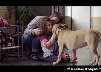 """Le vrai visage des chiens dits «dangereux"""" : le spot vidéo Gueules d'Anges"""