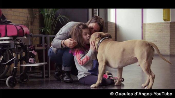 Le vrai visage des chiens dits «dangereux