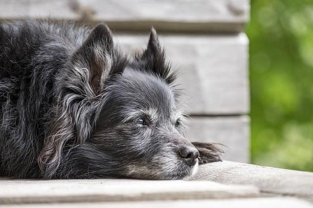 Changement de comportement signe cancer chien