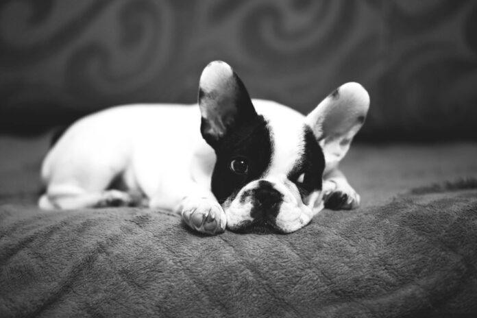 Empoisonnement chien causes