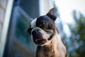 diffultés repiratoire cancer chez le chien