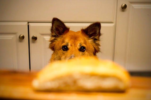 Nourriture chien poison