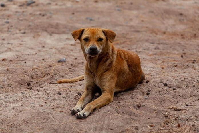 Elle sauve un chien abandonné et écrit une lettre