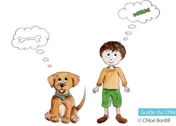 Education : comprendre et respecter les besoins de son chien