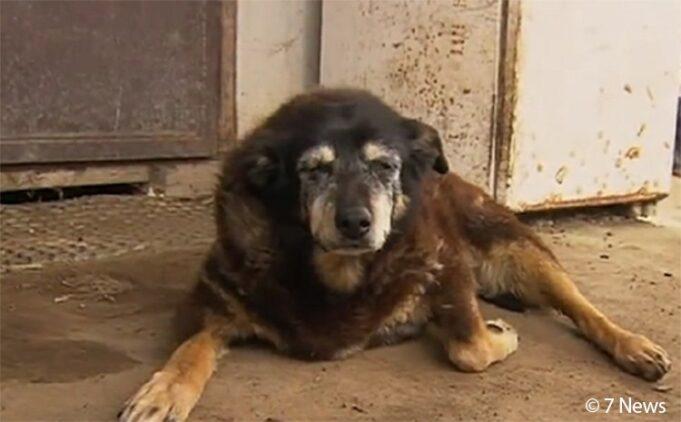 Maggie la chienne plus vieille monde est morte a 30 ans