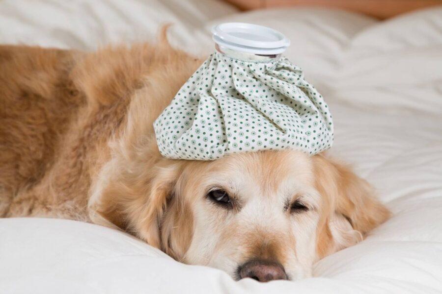 Température du chien : comment la prendre et l'évaluer ?