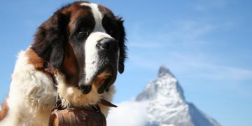 Top 10 grand chien