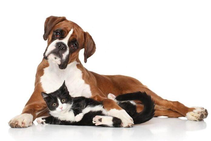 Cohabitation chien et chat mode d'emploi