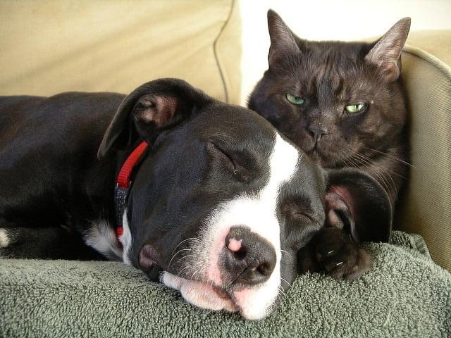 comment faire cohabiter chien et chat
