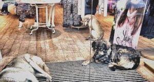 Magasin ouvre ses portes aux chiens errants Istanbul