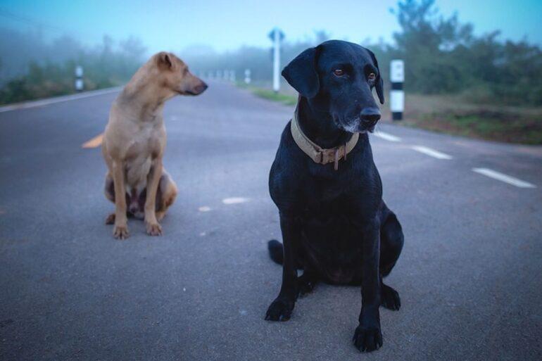 chien fugueur solutions