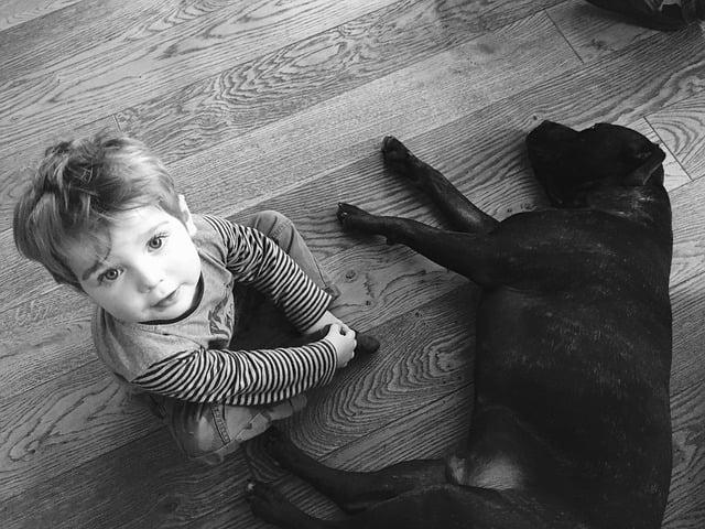 La morsure de chien et les enfants