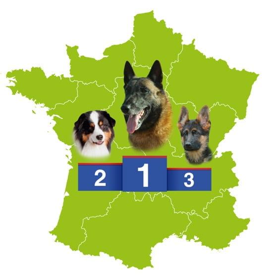 Les 3 races chiens préférées des français