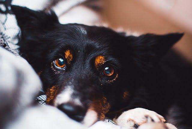 Mon chien grogne parce qu'il a peur
