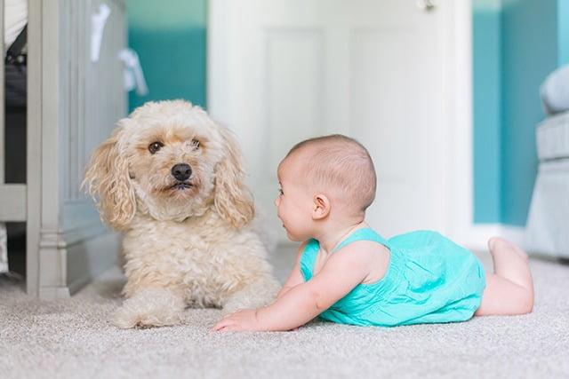 chien qui grogne sur un enfant