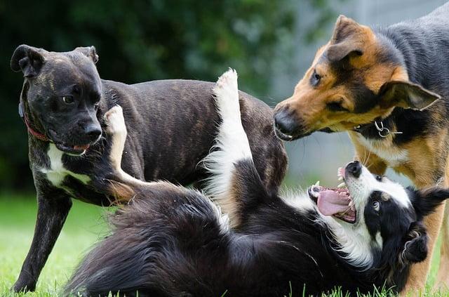Comment réagir en cas de morsure de chien