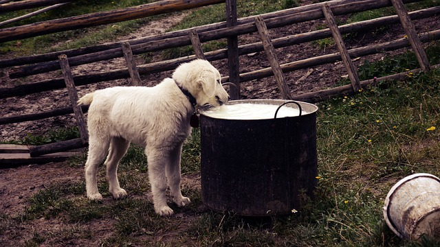 Constipation du chien alimentation et boisson à examiner