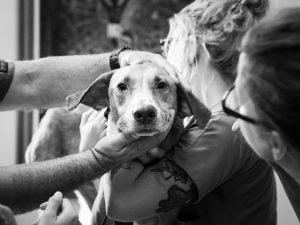 Visite vétérinaire pour constipation chien