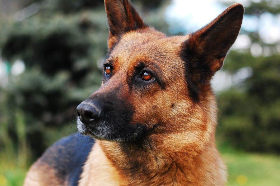 Âge du chien: quel âge a mon chien en âge humain?