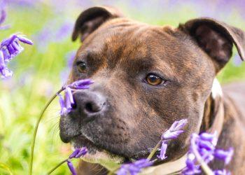 7 dangers du printemps pour les chiens