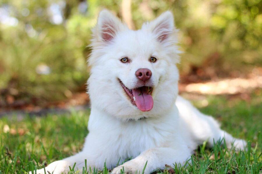 10 conseils pour rendre son chien heureux