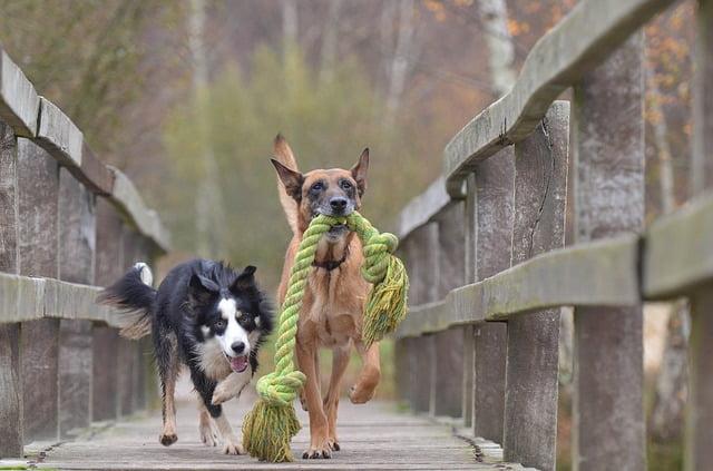 Le jeu : un besoin essentiel pour le chien
