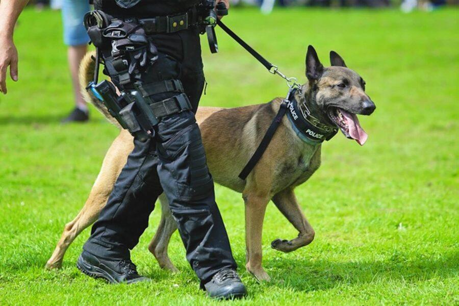 Top 10 chien de police