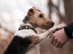 Comment devenir famille d'accueil pour chien