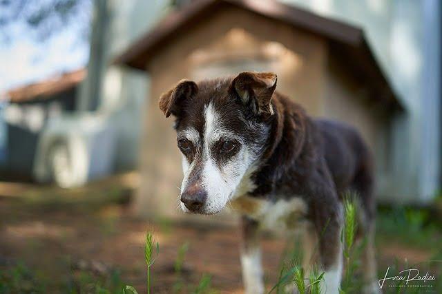 Quand faut-il faire euthanasier son chien
